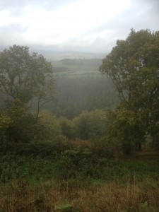 View from woodland on a misty day