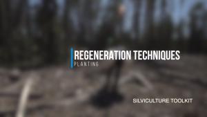 Regeneration Techniques - Planting