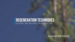 Regeneration Techniques - Seeding and Natural Regeneration