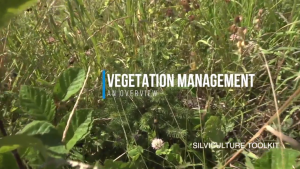 Vegetation Management - An Overview