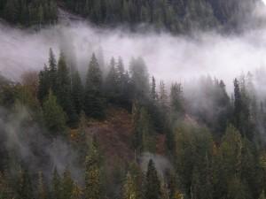 misty slope