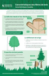 Wood fibre characteristics_fr
