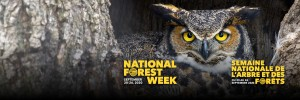 20200219-CIF-National-Forest-Week-Campaign-Twitter-Banner