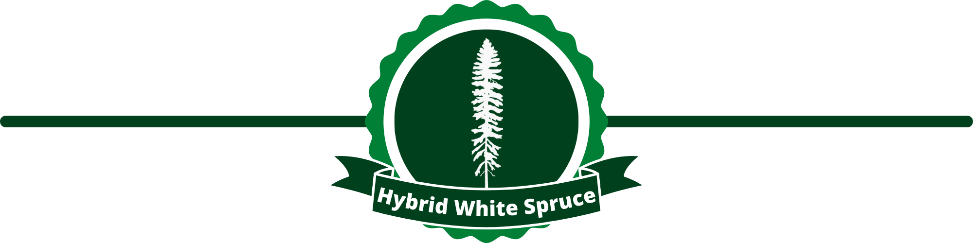 Hybrid White Spruce